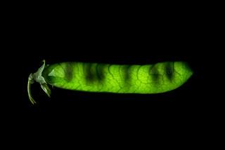 scanner peas...