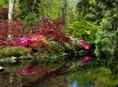 Exbury Gardens 2 (samm.doyle) Tags: reflections water azalea vibrant colours gardens shrubs exbury hampshire