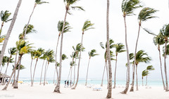 High Key (Hélène Baudart) Tags: high key palmiers punta cana