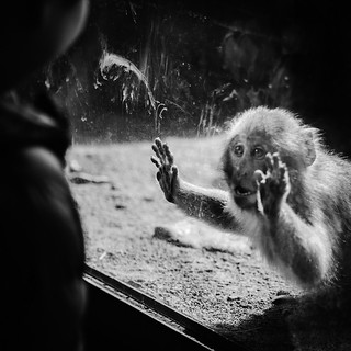 Baby macaque vs. toddler
