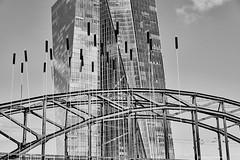 Frankfurt 3 (rainerneumann831) Tags: frankfurt ezb brücke hochhaus skulptur blackwhite architektur linien