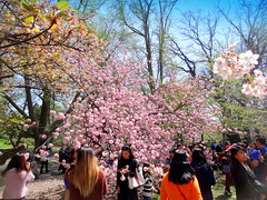 Celebrating The Spring (dimaruss34) Tags: newyork brooklyn dmitriyfomenko image sky clouds spring brooklynbotanicgarden flowers