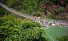 NEPAL, Auf dem Weg nach Pokhara, 16008/8269 (roba66) Tags: brücke bridge hängebrücke reisen travel explore voyages roba66 visit urlaub nepal asien asia südasien pokhara landschaft landscape paisaje nature natur naturalezza rio river fluss