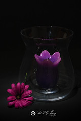 Proyecto 111/365 (Art.Mary) Tags: vela bougie candle cristal crystal flor fower bodegón stilllife naturemorte canon glass proyecto365 fleur
