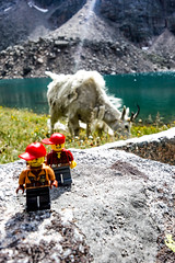 GranitePeak-126 (montuckyifyourlucky) Tags: montana granite mountains life outdoors explore outside wilderness rocks lego goat mountain wildlife mountaineering hiking