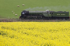 Green and Yellow 3 (ianwyliephoto) Tags: tornado 60163 steamengine steamtrain loco locomotive corbridge northumberland tynevalley tynedale ukrailtours train rapeseedoil yellow green