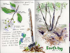 Earth Day Tree (MicheleC2) Tags: usk uskseattle urbansketchers earth day earthday2017 saskatoonberry shadberry serviceberry