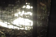 L'échappée belle (nathaliedunaigre) Tags: fence barrière bokeh effetbokeh liberté freedom reprendresaliberté sunsetlight coucherdesoleil reflets reflections eau water light lumière