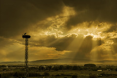 Hora dorada.... (Martika64) Tags: sunset golden goldenhour nest nidus sunrays clouds ski countryside stork outdoor atardecer horadorada nido torreeléctrica cigüeña cielo nubes rayosdesol campo montañas nwn noperson