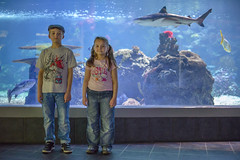 Shark (Michal Soukup) Tags: family vacation berlin kids germany children aquarium shark day daughter son off nikond600 nikkor50mmf14g