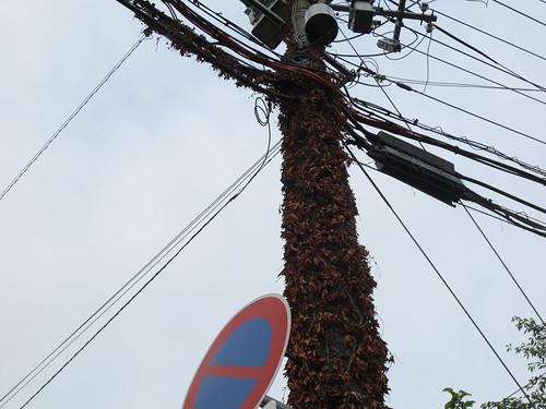 びっくり電柱