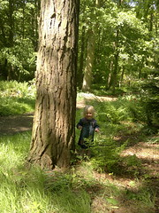 Boo! (Gazzmann80) Tags: trees nature toddler littleforestgirl
