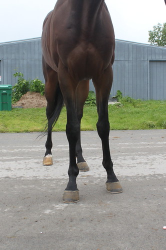 Dutch Smoothie Four Year Old 16h Dark Bay Colt Placed