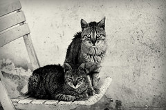 """Marito e Moglie • <a style=""""font-size:0.8em;"""" href=""""http://www.flickr.com/photos/92529237@N02/9150226089/"""" target=""""_blank"""">View on Flickr</a>"""