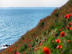 Kseberga (Ulf Bodin) Tags: sea coast skne sweden poppy sverige scania vallmo kseberga skneln canoneos5dmarkiii canonef70200mmf28lisiiusm