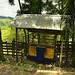 Una bascula per pesare i capi di bestiame alla vendita