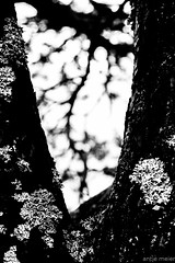 nature art (antje.m) Tags: sky blackandwhite bw tree nature norway contrast outdoor lichen flechte mreogromsdal canoneos600d