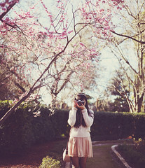 Cherry Blossom Season (Amanda Mabel) Tags: camera pink flowers portrait selfportrait film canon vintage spring sydney australia cherryblossom newsouthwales faceless sakura cherryblossoms canonae1 meiji tulleskirt knitsweater amandamabel amandamabelphotography