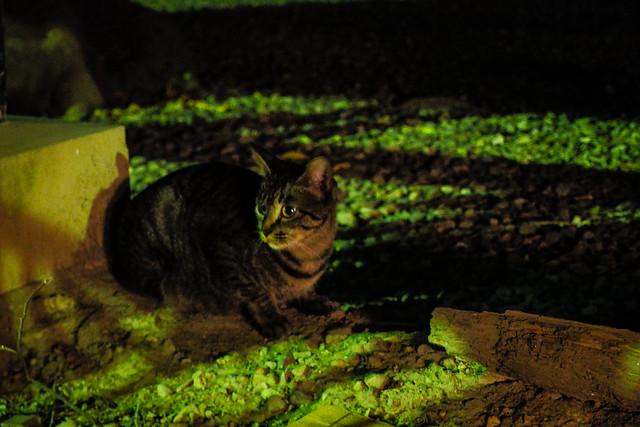 Today's Cat@2013-10-05
