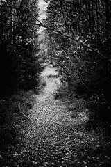 The Path (R A Pyke (SweRon)) Tags: autumn blackandwhite bw fall forest dark focus sweden path ominous fujifilm manual rebro xpro1 sweron gddesta 2013100800255 olympusomzuiko55mmf14