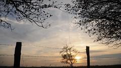 Sonnenuntergang hinter Stacheldraht; Süderstapel, Stapelholm (4) (Chironius) Tags: süderstapel stapelholm schleswigholstein deutschland germany allemagne alemania germania германия szlezwigholsztyn niemcy gegenlicht sonnenuntergang sunset atardecer tramonto zonsondergang закат dämmerung dusk schemering crépuscule crepuscolo abend evening abends landwirtschaft