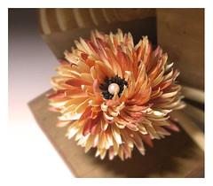 Chrysanthemum (HER.Cha.) Tags: france fleur brooch dyeing corsage chrysanthemum fleuriste silkflower artificielle broochfrance
