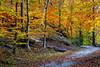 Fall Walking - (BarryFree) Tags: odc2 ourdailychallenge slta77v ourdailychallengeg2