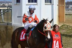 "2013-03-27 (63) r5 Trevor McCarthy on #1A Light of My Life (JLeeFleenor) Tags: photos photography marylandracing md marylandhorseracing laurelpark jockey جُوكِي ""赛马骑师"" jinete ""競馬騎手"" dżokej jocheu คนขี่ม้าแข่ง jóquei žokej kilparatsastaja rennreiter fantino ""경마 기수"" жокей jokey người horses thoroughbreds equine equestrian cheval cavalo cavallo cavall caballo pferd paard perd hevonen hest hestur cal kon konj beygir capall ceffyl cuddy yarraman faras alogo soos kuda uma pfeerd koin حصان кон 马 häst άλογο סוס घोड़ा 馬 koń лошадь maryland"