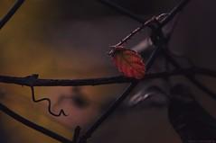 Sombre (Manon.v_photographie) Tags: plant macro nature plante dark outdoor sombre extrieur fonc nikond5000