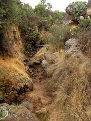 la barranca y la miel del escorpion (pp azulado) Tags: cactus naturaleza plant planta nature mexico madera flora df plantas natural natura campo desierto madero nacional follaje piedras piedra tunas maleza otumba cactasea