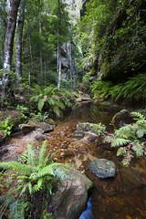 Grand Canyon Creek (Alastair Pollock) Tags: rain creek forest bush nikon hiking grandcanyon bluemountains nsw 1635mm d700 alastairpollock