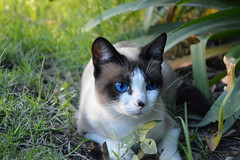 Cat (IgnacioRomualdi) Tags: pet cat garden photography backyard nikon nikonistas