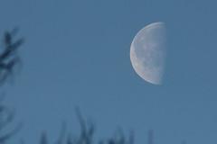 Gibbous moon (Pog's pix) Tags: uk morning sky moon scotland glasgow gibbous