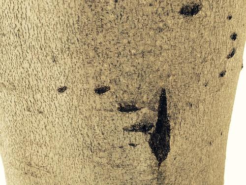 bear claw marks