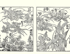 Violet, Chinese milk-vetch, Chinese-celery, creeping saxifrage, dandelion, monochoria and Chinese arrowhead (Japanese Flower and Bird Art) Tags: flower violet viola violaceae chinese milkvetch astragalus sinicus fabaceae chinesecelery oenanthe javanica apiaceae creeping saxifrage saxifraga stolonifera saxifragaceae dandelion taraxacum asteraceae monochoria korsakowii pontederiaceae arrowhead sagittaria trifolia alismataceae katsumasa yoshimura kano woodblock picture book japan japanese art readercollection