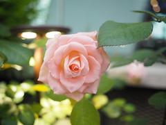 P3105355 (ong_jeric) Tags: olympus olympuspenepl7 mzuiko 17mm mzuikodigital17mmf18 singapore gardensbythebay