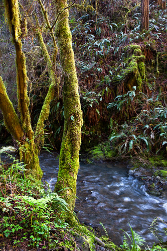 mendocino vandammestatepark green stream ferns moss ferncanyon