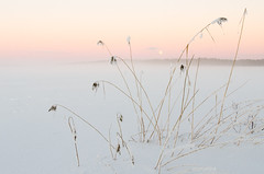 Winter Landscape II (Mikael R.) Tags: winter ice snow landscape moon dusk settingsun island lake reed nikon d7000 sigma1750mm colorful winterwonderland