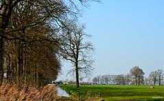 Landscape  Forest (JaapCom) Tags: jaapcom landscape landschaft landschap trees wezep dutchnetherlands natural