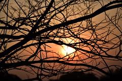 20170330_006_2 (まさちゃん) Tags: 夕陽 シルエット silhouette