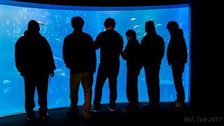 Choosing sushi... @ the aquarium...