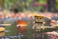 danbo loves to go out and play in the rain....... (glendamaree) Tags: danbo danboard