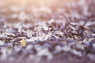 :: seeds ::