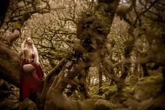 Forest Maiden (i-r-paulus) Tags: wistmanswood twistedoak oak stuntedoaks mossy mossytree maiden forest moody