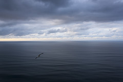Son de mar: In blue... (Xuan Moro) Tags: paisaje landscape marina seascape asturias colunga luces mar sea gaviota seagull azul blue xuanmoro