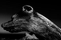 Dog-shaped Trunk (FraConti84) Tags: raw bw bnw bnwshot bnwmood bnwfakedog blackandwhite blackandwhiteshot blackandwhitefakedog dogshapedtrunk detail weirdshape canon highcontrast biancoenero biancoenerosenigallia wannabeadog beach senigallia italy plage