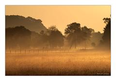 Campagne ligérienne. (Bruno-photos2013) Tags: bretagne paysage paysageligérien landscape loireatlantique leverdujour ligérien brume brouillard champ nature sunrise foggy prairie paysdeloire