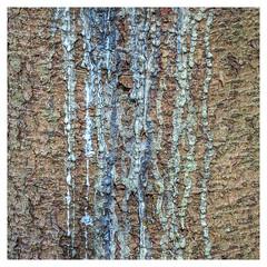 93/365 (Jane Simmonds) Tags: forestofdean nature tree bark sap fir abstract texture patterns