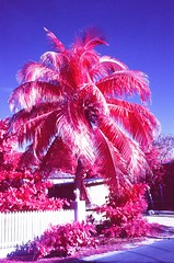 #colorinfrared #infrared #colorir #fppinfrachrome #aerochrome #harbourislands #leica #35mm #filmphotographic #analog #shootfilm (dadsoldcamera) Tags: colorinfrared infrared colorir fppinfrachrome aerochrome harbourislands leica 35mm filmphotographic analog shootfilm