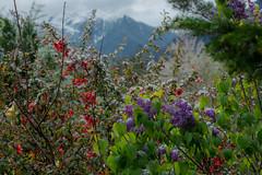 SPAIN (WeVe1) Tags: pyrenees spring snowblossoms pirineos